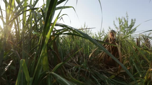 general views of farm workers cutting sugarcane during a crop harvest in a field in the district of hapur uttar pradesh india on thursday april 3 a... - sugar cane stock videos and b-roll footage