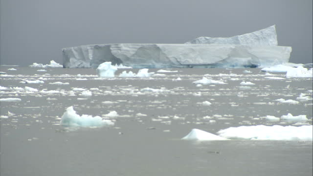 general views of landscape: ice floes / crevasse / mountains; bird flying along over icy sea / more of ice floating, icebergs - ice floe stock videos & royalty-free footage