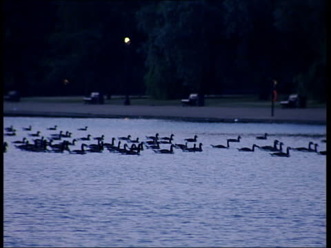 stockvideo's en b-roll-footage met general views of london: dawn skyline / hyde park / thames; hyde park: pigeons pecking around on concrete ground / ducks on pond at dawn, pond /... - pikken