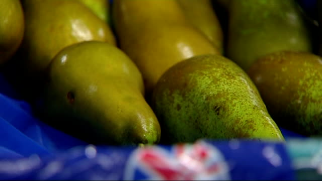 general views of pears being sorted on a quality control production line england kent int general views of pears along on conveyor belt and being... - pear stock videos & royalty-free footage
