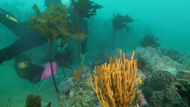 general views of scuba diving in coromandel peninsula, new zealand. - aqualung diving equipment video stock e b–roll