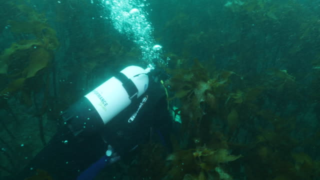 general views of scuba diving in coromandel peninsula new zealand - seaweed stock videos & royalty-free footage