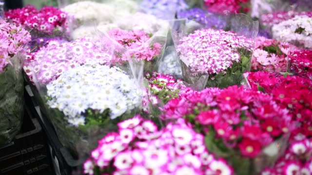 general views of shoppers browsing flowers at a flower market in victoria park in hong kong, china, on sunday, feb 15, 2015 - ゼラニウム点の映像素材/bロール
