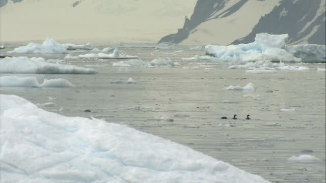 seals / penguins / birds seal lying on an ice floe / water fowl seen swimming in the distance / group of adele penguins preening on snowy surface - preening animal behavior stock videos & royalty-free footage