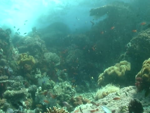 vidéos et rushes de general vista ms and see turbulent surface water crashing on reef - groupe moyen d'animaux