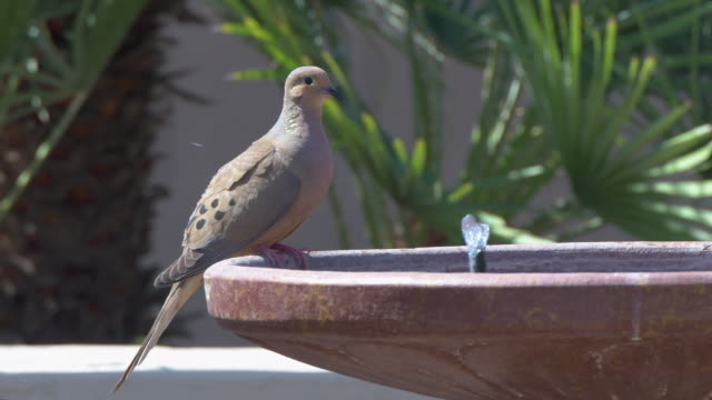 generic 4k video of a backyard birdbath with a fountain and mourning dove - generic location stock videos & royalty-free footage