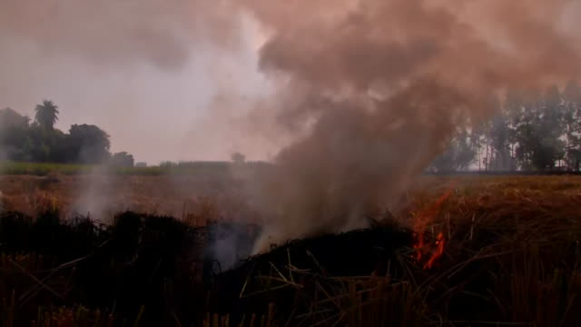 generic shot of heavy smoke coming out from burning stubble and polluting the environment in ludhiana. the maximum cases of stubble burning this year... - stubble stock videos & royalty-free footage