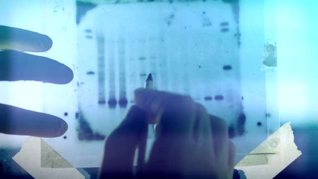 dna genetic analysis results - genetic research stock videos & royalty-free footage