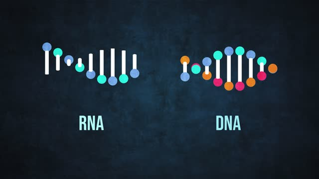genetic dna and rna structure - adenine thymine guanine cytosine - protein stock videos & royalty-free footage