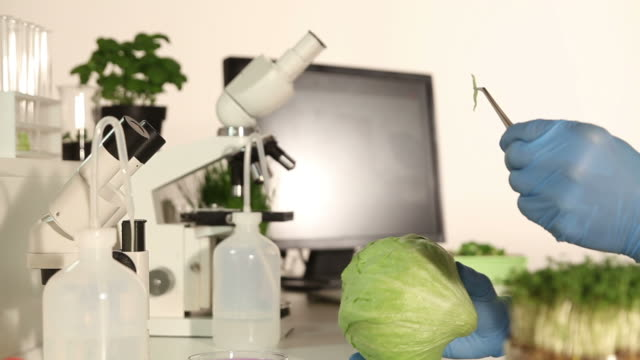 genetic research lab - food control - medical test stock videos & royalty-free footage