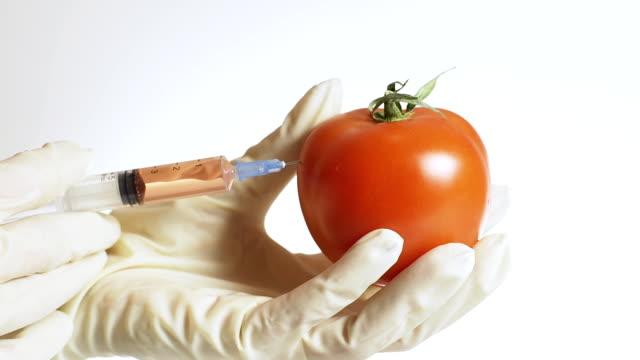 HD: Genetically Modified Tomato