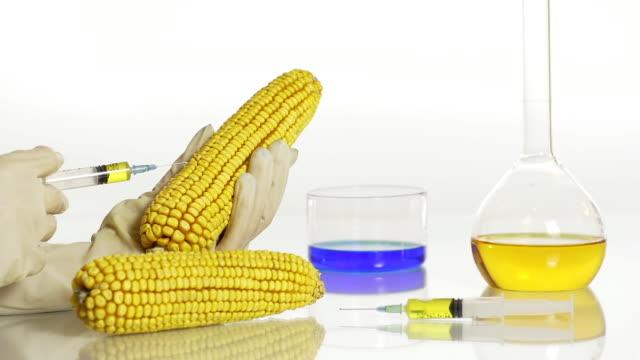 HD DOLLY: Genetisch modifizierte Das Corn Genom