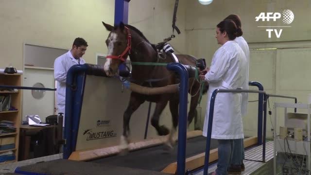 genetistas argentinos analizaran al caballo de raza polo argentino el mejor del mundo para ese deporte y ademas el animal mas clonado del planeta - planeta stock videos & royalty-free footage