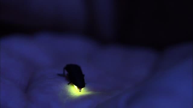 genjibotaru on a palm - animal body part点の映像素材/bロール