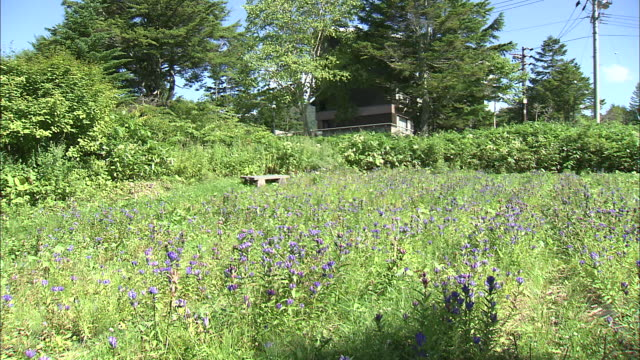 gentians bloom in a field. - telegraph pole stock videos & royalty-free footage
