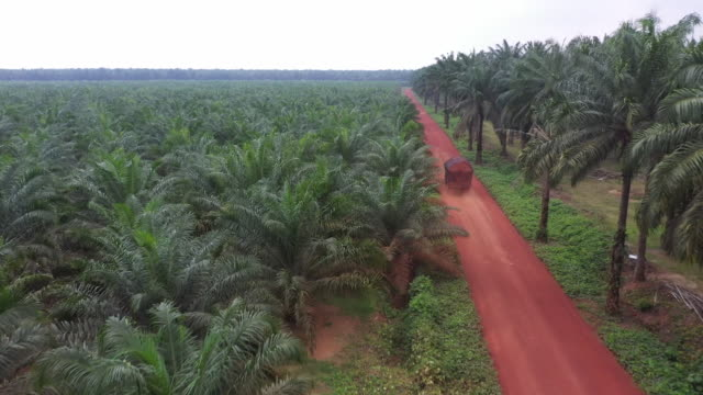 genting drones monitoring and mapping oil palm plantations in johor malaysia on thursday nov 14 2019 - johor stock videos & royalty-free footage