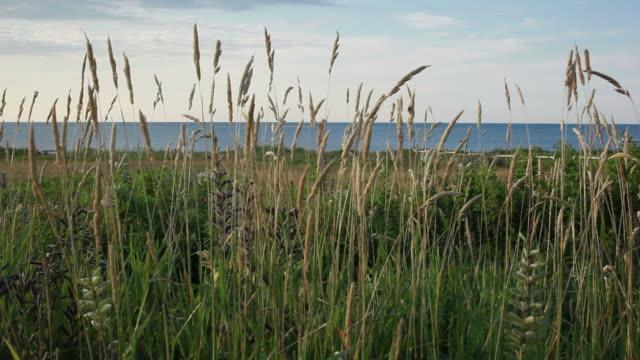 Gentle breeze by the ocean