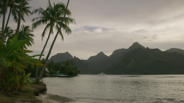 gentle ocean waves on tropical beach near palm trees / moorea, french polynesia - moorea stock videos and b-roll footage