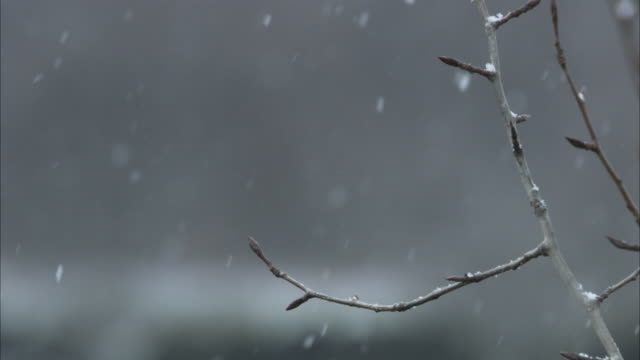 vídeos de stock, filmes e b-roll de gentle snow drifts down past a leafless branch. - neve