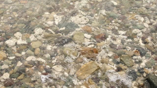 vidéos et rushes de vagues douces se brisant sur la plage de corail rocheux - corail cnidaire