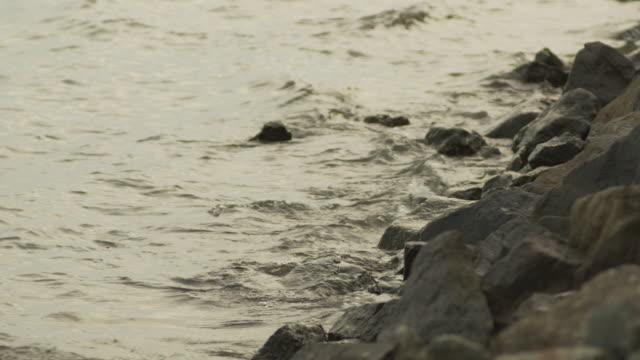 gentle waves lap the rocky shoreline of chesapeake bay, virginia, usa. - estuary stock videos & royalty-free footage