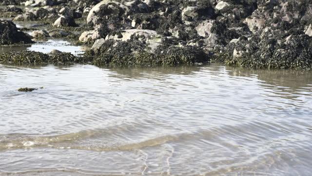 gentle waves next to seaweed covered rocks - general view stock videos & royalty-free footage