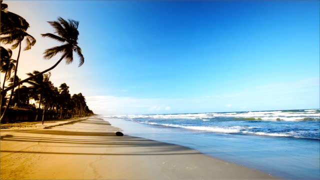 hd gentle waves on caribbean island beach at sunset - palm tree stock videos & royalty-free footage