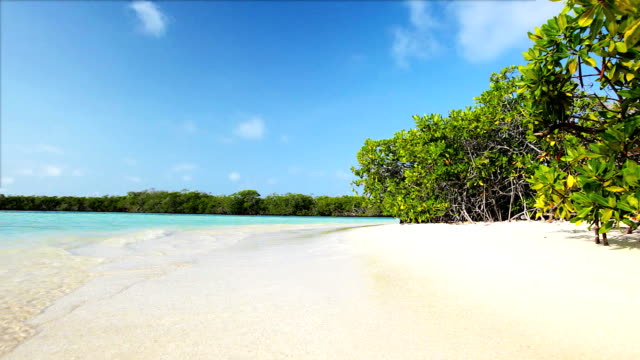 hd gentle waves on tropical mangrove white sand cay beach - mangrove tree stock videos & royalty-free footage