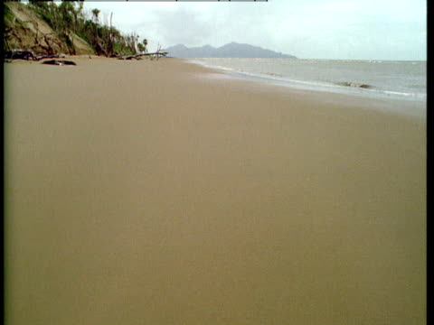 """gentle waves wash onto a pristine sandy beach. - """"bbc natural history"""" stock videos & royalty-free footage"""
