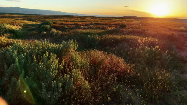 a gentle wind blows through bushes and grasses in a high desert landscape in western colorado at sunset - general view stock videos & royalty-free footage