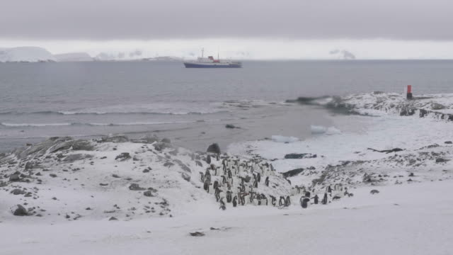 Gentoo penguin colony in Mikkelsen Harbour with an exploration vessel in the distance