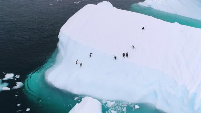 gentoo penguin leaps onto iceberg - antarctica penguins stock videos & royalty-free footage