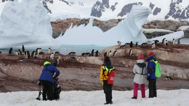 gentoo penguin pygoscelis papua and tourists on useful island gerlache strasit antarctic peninsular - conceptual symbol stock videos and b-roll footage