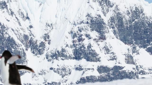 gentoo penguin - antarctic peninsula stock videos & royalty-free footage