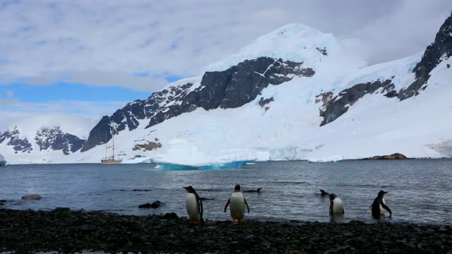 gentoo penguins - ice floe stock videos & royalty-free footage