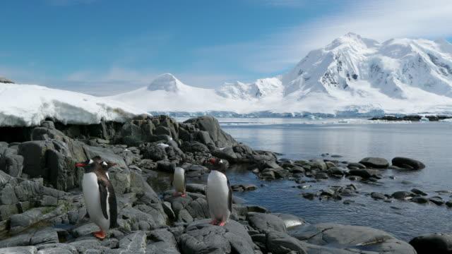 gentoo penguins - antarctic peninsula stock videos & royalty-free footage
