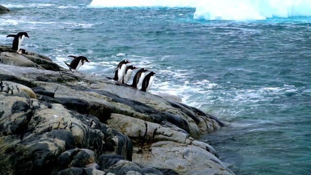 gentoo penguins - south pole stock videos and b-roll footage
