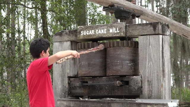 georgia okefenokee boy sticks cane in sugar mill.mov - okefenokee national wildlife refuge stock videos and b-roll footage