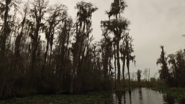 georgia okefenokee brown cypress trees - okefenokee national wildlife refuge stock videos and b-roll footage