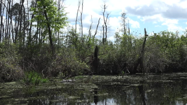 georgia okefenokee clouds over swamp pan - okefenokee national wildlife refuge stock videos and b-roll footage