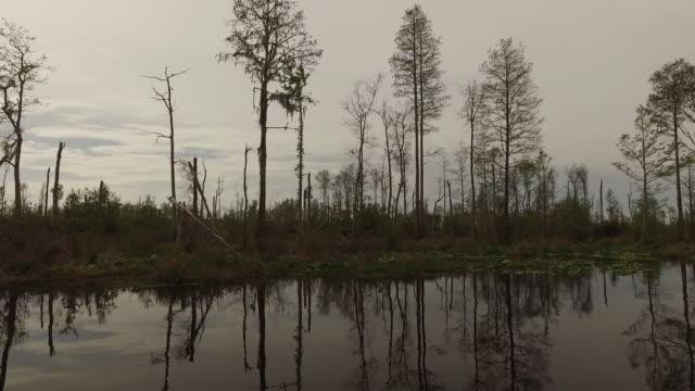georgia okefenokee cut over cypress forest from boat - okefenokee national wildlife refuge stock videos and b-roll footage