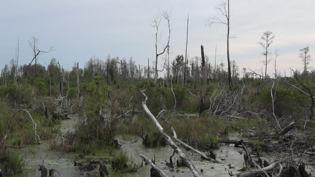 georgia okefenokee cut over swamp pan - okefenokee national wildlife refuge stock videos and b-roll footage