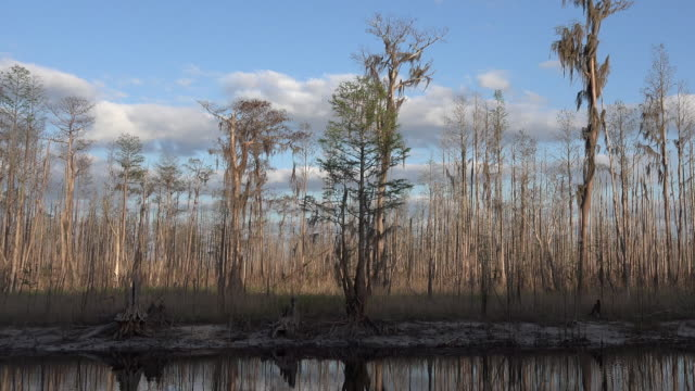 georgia okefenokee cypress forest zoom out - okefenokee national wildlife refuge stock videos and b-roll footage