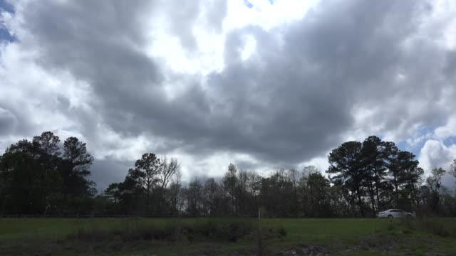 georgia okefenokee dark cloud over trees - okefenokee national wildlife refuge stock videos and b-roll footage