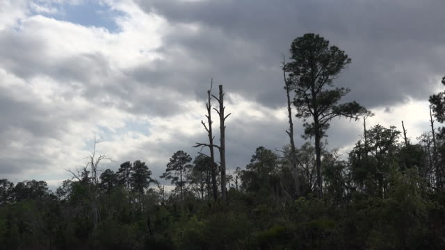 georgia okefenokee dark clouds over forest - okefenokee national wildlife refuge stock videos and b-roll footage