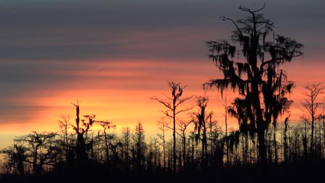 Georgia Okefenokee dark trees against sky pan.mov