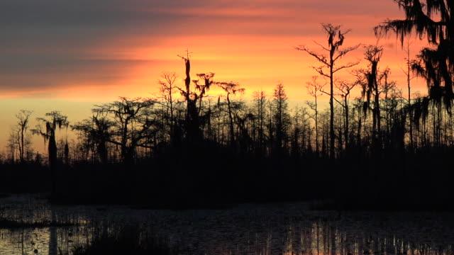 georgia okefenokee dark trees against sky zooms out - オケフェノキー国立野生生物保護区点の映像素材/bロール