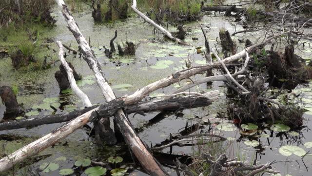 georgia okefenokee dead branches in swamp water.mov - オケフェノキー国立野生生物保護区点の映像素材/bロール