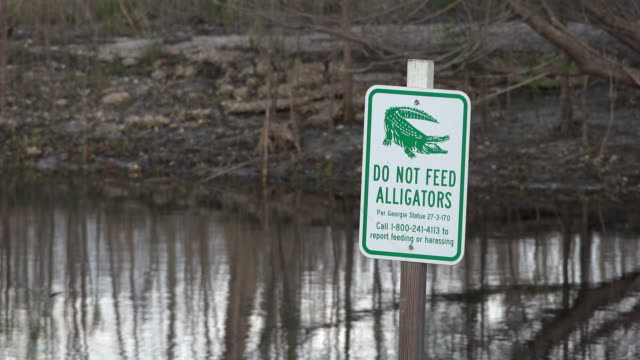 georgia okefenokee don't feed alligators sign - alligator stock videos & royalty-free footage