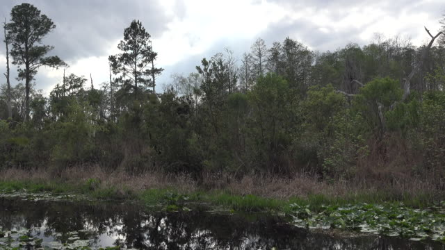 georgia okefenokee drainage canal and forest pan - オケフェノキー国立野生生物保護区点の映像素材/bロール